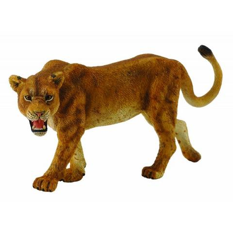 Collecta Leoaica